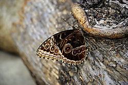 Omaha_butterfly.jpg
