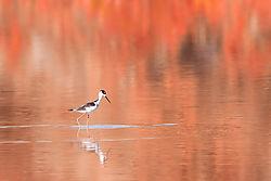 On_autumn_pond.jpg