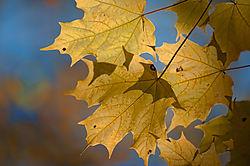 Orange_Leaves.jpg