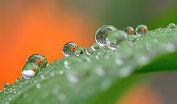 Orange_dew.jpg
