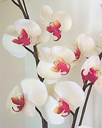 Orchid_Fresco.jpg
