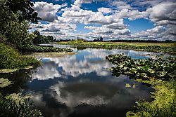 Oregon_Reflections.jpg