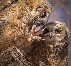 Owl_Beauty_Day-1.jpg