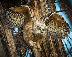 Owl_Wings-1.jpg
