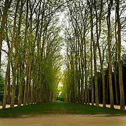 PALACE_OF_VERSAILLES_GARDEN_PATH_PARIS_FRANCE_V_12_05_0248LR.jpg