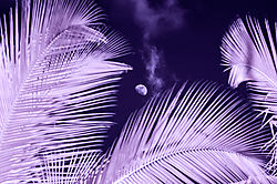 PALMS_and_MOON_0612.jpg