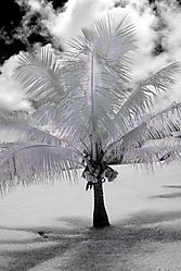 PALM_TREE_3072.jpg