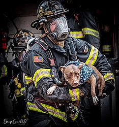 PFD_Structure_Fire_b3142021_dog11.jpg