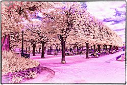 PUBLIC_PARK_PARIS_2015.jpg