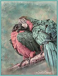 Parrots_Warmed_in_Pixio.jpg