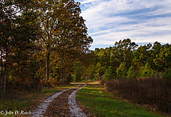 Path_through_the_Woods-2.jpg