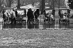 Pedicabs_in_the_Rain.jpg