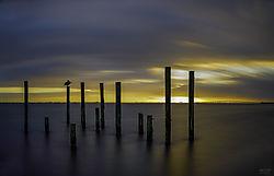Pelican_Sunrise.jpg