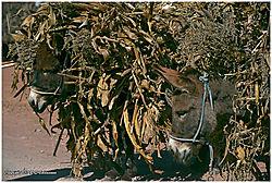 Peru-Beasts-of-Burden-PPW.jpg