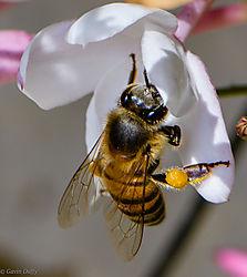 Pollinator_1_of_1_-2.jpg