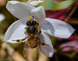 Pollinator_1_of_1_.jpg