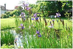 Pond_and_irises.JPG