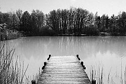 Pond_in_Leaf_2.jpg