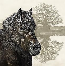 Pony_Tree_1200px.jpg