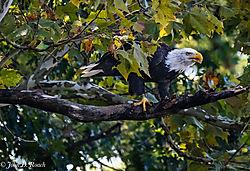 Proud_Eagle-15.jpg