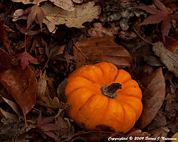 Pumpkin-Leaves.jpg