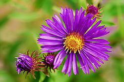 Purple_Flower_11.jpg