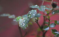 RAIN_DROPS3.jpg