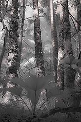 RAIN_FOREST1.JPG