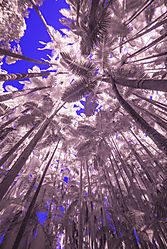 RAIN_FOREST_2538.jpg