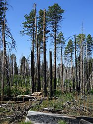 RECOVERING_FOREST_ARIZONA-208.JPG