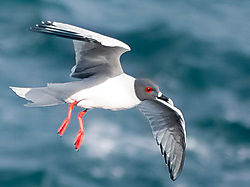 RED_FOOTED_BOOBY_EDITED-2.jpg