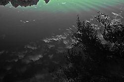 REFLECTING_POND.jpg