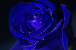 ROSE_DOOR_012a.jpg