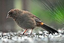 Rainy-Days-and-Mondays-PPW.jpg