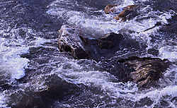 Rapids_B_0438.jpg