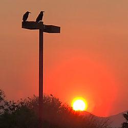 Ravens_at_Sunrise_iphone-8.jpg