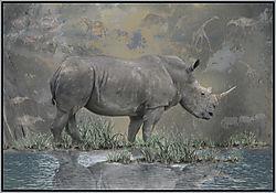 Rhino_Cave_Dwellers.jpg