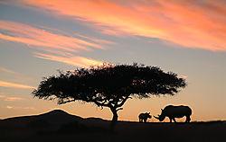 Rhino_Sunset.jpg