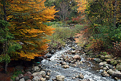River_Flow.jpg