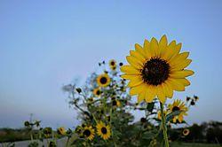 Road_Flower.jpg