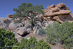 Rocks-and-Trees-2-in-Joshua-Tree-National-Park-PPW.jpg