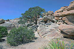 Rocks-and-Trees-in-Joshua-Tree-National-Park-PPW.jpg