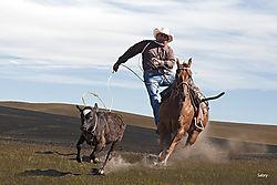 Roping_cowboy.jpg