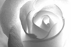 RoseCurves_1.jpg