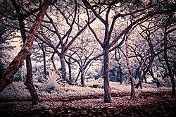 SHORELINE_TREES.JPG