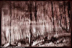 SH_Trees_2694.jpg