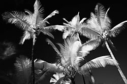 SUMMER_TREES.jpg