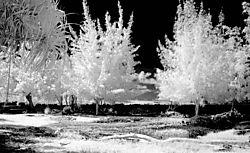 SUMMER_TREES1.jpg