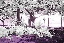 SUNSET_THROUGH_THE_TREES_2830.jpg