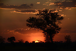 SUNSET_TREE_SILHOUETTES_SINGITA_LEBOMBO_SOUTH_AFRICA_14_06_2349LR.jpg